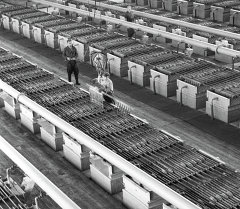 Кадамжай сурма комбинаты 1972-жыл. Архив