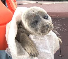 """Приключения любопытного нерпенка, или Как байкальский тюлень """"гостил у рыбака"""