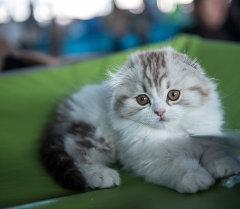 Котенок. Архивное фото