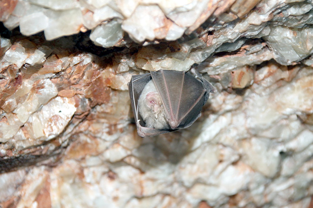 Пещеры Туя-Муюна. Один из интереснейших спелеологических и туристических объектов Средней Азии – горный массив Туя-Муюн (Верблюжья шея). Находится в 35 километрах от Оша. Романтики могут получить впечатлений сполна: сложные переходы и лазы, лабиринты и подземные озерца, причудливое разнообразие минералов, разгадывание тайн пещер.
