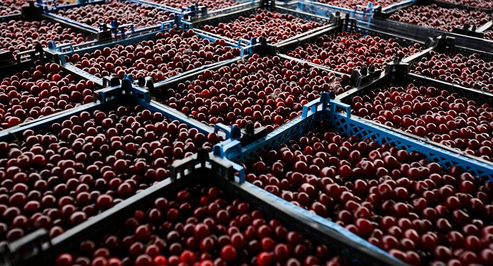 Ящики с вишнями. Архивное фото