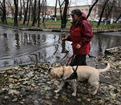 Москвада көзү азиз кызга кол салып, тоноочулар анын күчүгүн уурдап кетишти