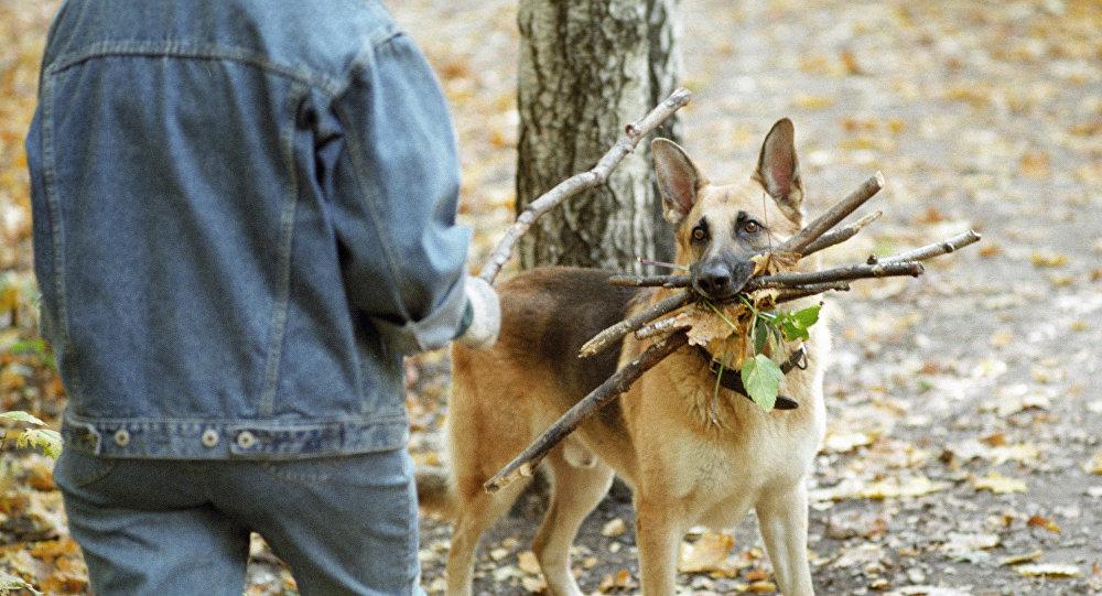 Хозяин играет с собакой в парке. Архивное
