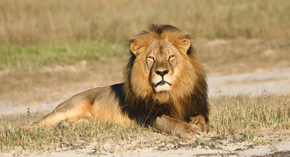 Лев Сесил, символ Зимбабве. Архивное фото