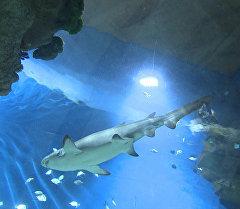Самый крупный в Европе океанографический центр Москвариум открылся на территории ВДНХ в российской столице. Смотрите на видео, как первые посетители рассматривали рыб и охотились на морских звезд в день открытия.