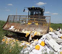 Экскаватор против еды: как уничтожили девять тонн сыра под Белгородом