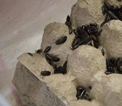 Тараканы. Архивное фото