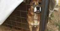 Бишкекские волонтеры кормили и ухаживали за бездомными собаками