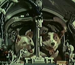 Космическая одиссея Белки и Стрелки. Кадры из архива