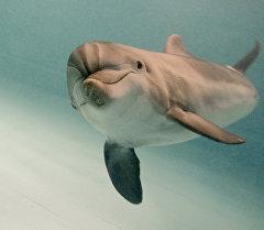 Дельфин в дельфинарии. Архивное фото