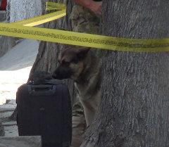 Операция по обезвреживанию бомбы в Бишкеке — кадры с места событий