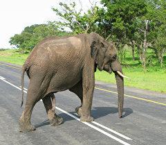 Слон в национальном парке. Архивное фото