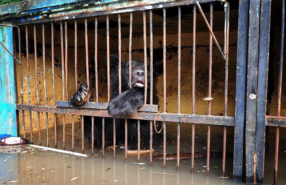Уссурийский зоопарк после наводнения