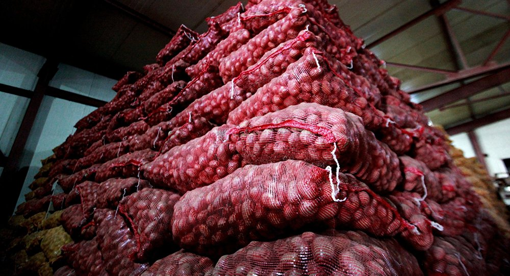 Урожай картофеля. Архивное фото