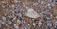 Морское дно в горах Баткена  — доисторические ракушки Сары-Тоо
