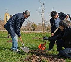 Президент Алмазбек Атамбаев дарак эгүү кезинде. Архив