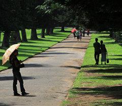В Королевском ботаническом саду (Royal Botanical Garden) в Перадении, Шри-Ланка. Архивное фото