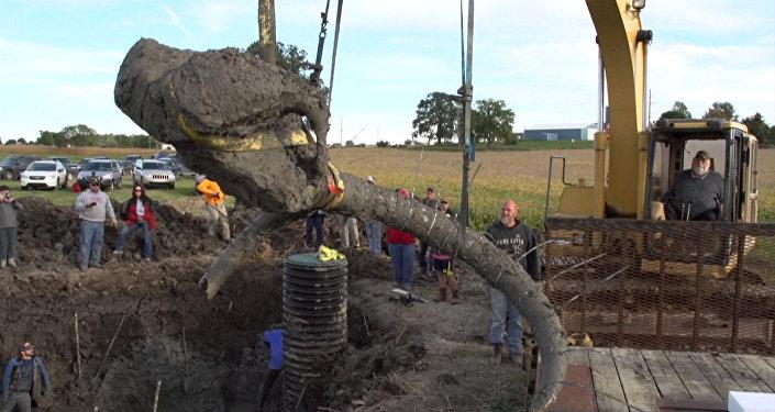 Останки шерстистого мамонта были найдены во время раскопок на соевом поле палеонтологами в американском штате Мичиган, недалеко от города Энн-Арбор. Смотрите на видео, как специалисты извлекали кости животного из земли.