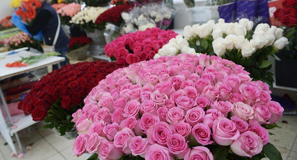 Цветок сколько стоит