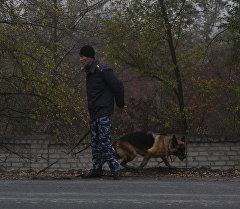 Сотрудник правоохранительных органов с собакой. Архивное фото