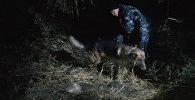 Ночные поиски беглеца в жилмассиве Дордой-1 — кадры с места событий