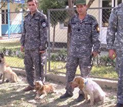 Собаки спецназначения: спаниели и овчарки учатся искать наркотики