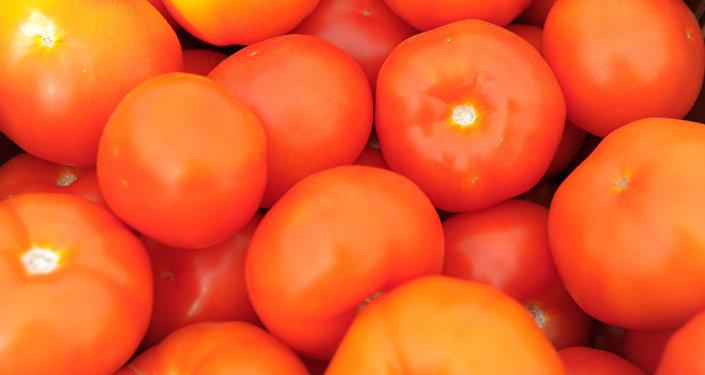 Урожай помидоров. Архивное фото