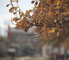 Капли воды на ветке дерева. Архивное фото