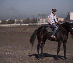 Лучший иноходец — Ганк. Сейчас в Кыргызстане нет ему равных