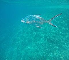 Рыба в океане. Архивное фото