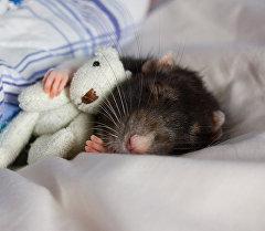 Спящий грызун. Архивное фото