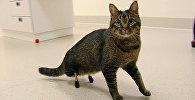 Титановые лапы для кота: ветеринары установили протезы домашнему питомцу