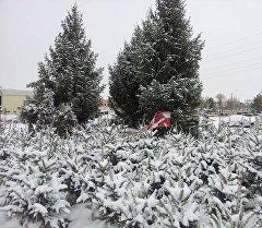 Бишкектин Ахунбаев жана Шабдан баатыр көчөлөрүнүн кесилишинде ачылган балаты базары.