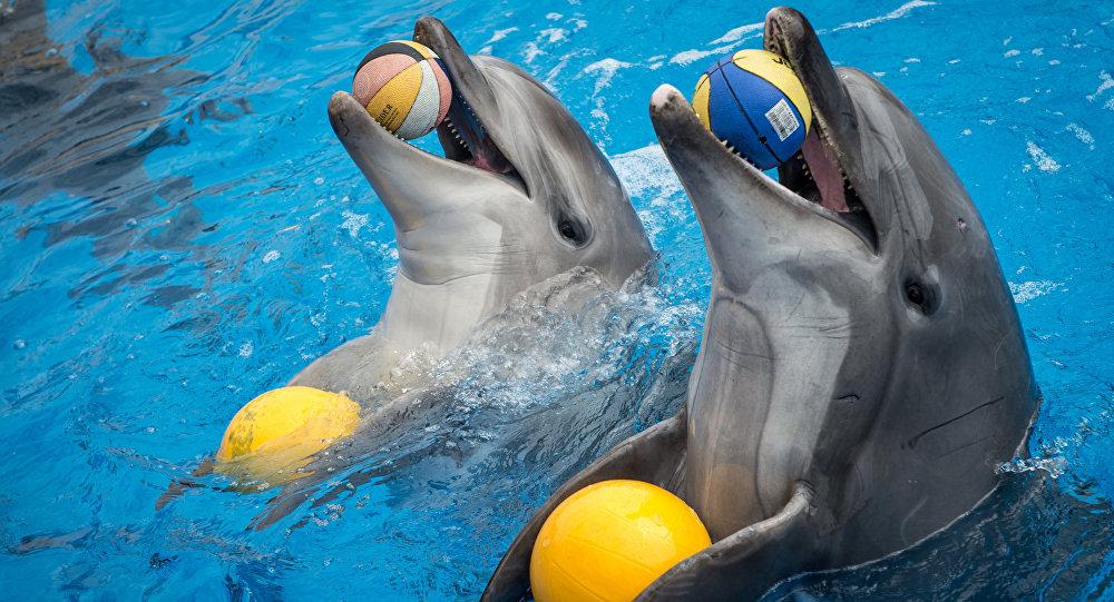 Дельфины в бассейне дельфинария. Архивное фото