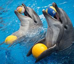 Дельфинарийдеги дельфиндер. Архив