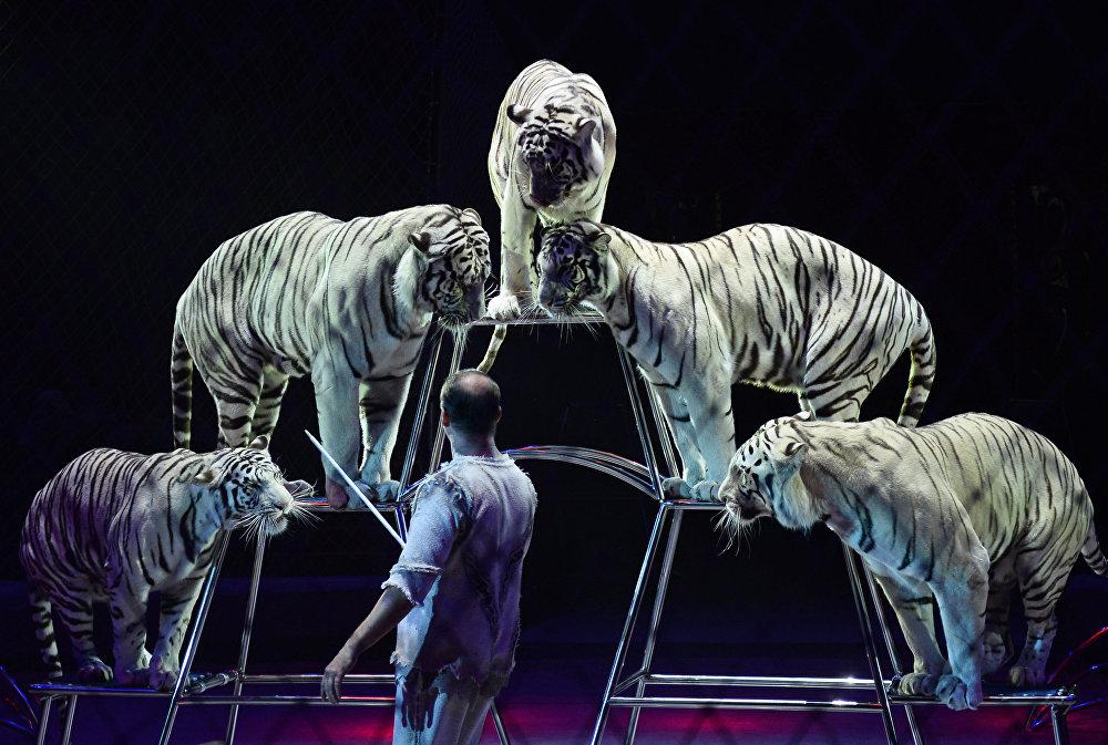 Гала шоу в рамках всемирного фестиваля циркового искусства Идол
