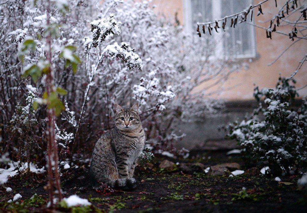 Зима в Новосибирской области