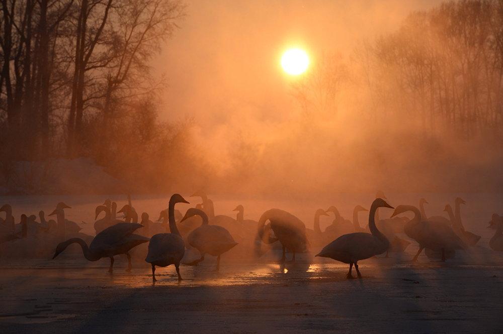 Природный комплексный заказник Лебединый в Бийске