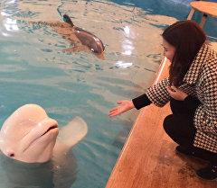 Көзгө жагымдуу дельфиндер Бишкектеги бассейнде ары-бери сүзүштү