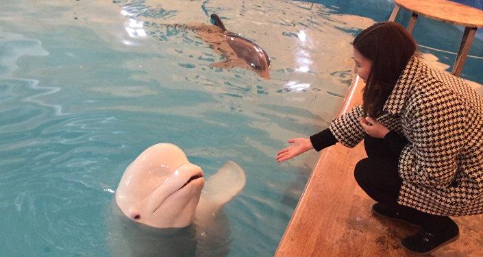 Мимимишные дельфины ныряли в бишкекском бассейне