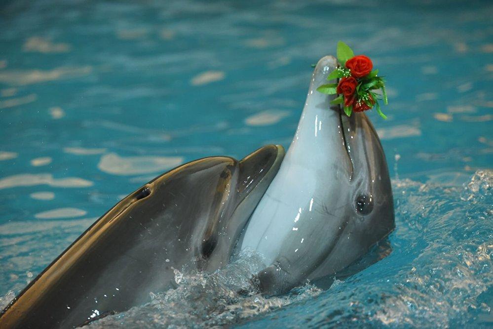 Дельфины плавают с букетом цветов