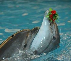 Дельфины во время выступлений на дельфинарии. Архивное фото
