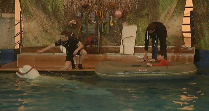 Катание с китом и танцы тюленя. Кадры первого представления