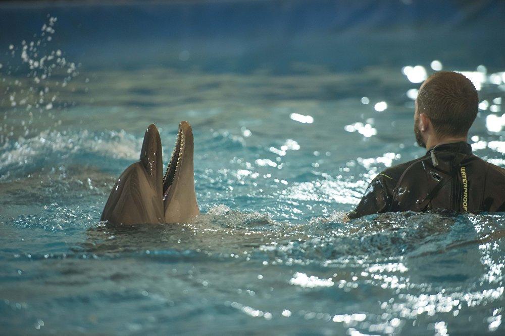 В бассейне глубиной 3,5 метра 650 кубов морской воды