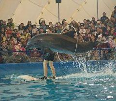 Шакекчеден секирип жаткан дельфин.