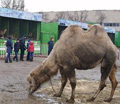 Жаныбарлардын жашоо шарты — Бишкектеги зоопарктан тартылган видео
