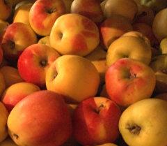 Баткенский садовод раскрыл секрет, как хранить яблоки всю зиму