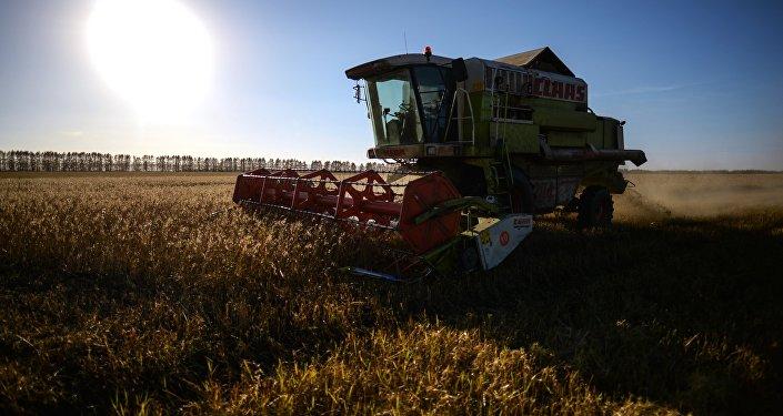 Уборка урожая зерна. Архивное фото
