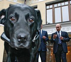 Президент РФ Владимир Путин (на втором плане справа). На первом плане - лабрадор Кони в ошейнике. Архивное фото