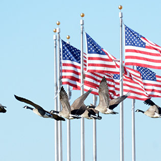 Стая гусей летит на фоне флага США возле монумента Вашингтона. Архивное фото